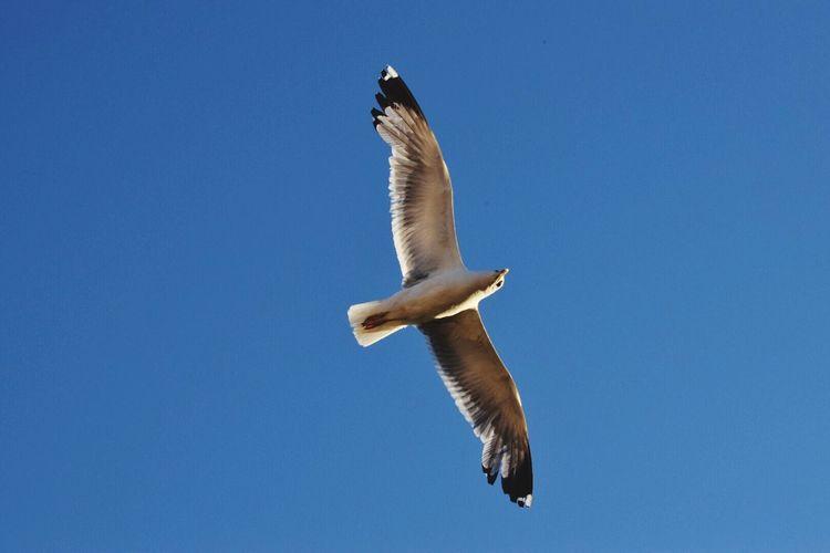 EyeEm Selects Bird Flying Animal Themes One Animal Seagull Gull Rome Fly Gulls In Flight