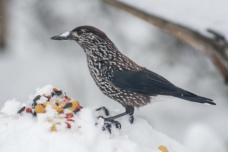 Bird perching on a snow covered landscape