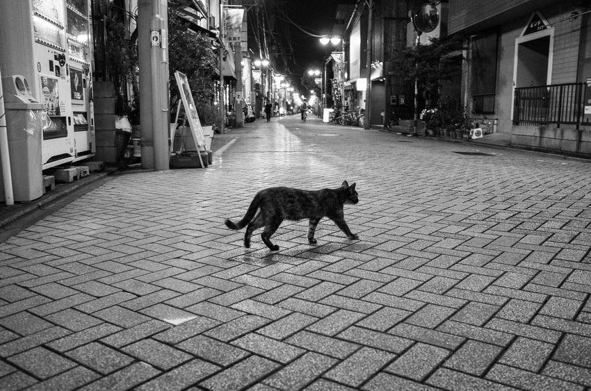 Street Mammal Animal Animal Themes Domestic One Animal Pets #urbanana: The Urban Playground City No People HUAWEI Photo Award: After Dark