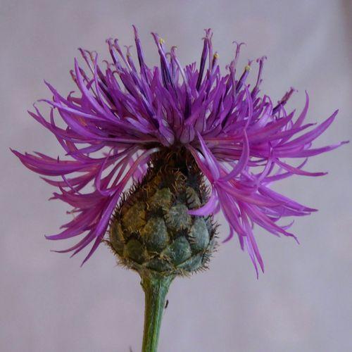 Macro Macro_collection Macro Photography Macro Nature Macro_flower Flowers Flowers_collection Flower Photography Flor Flores Y Más Flores