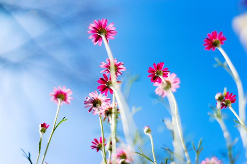 Growing, growing ... Simplicity Flowering Plant Flower Plant Freshness Beauty In Nature Growth Fragility Vulnerability  Sky Low Angle View Blue Nature No People Close-up Pink Color Flower Head Day Plant Stem