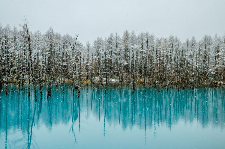 Beautiful autumn view of the world famous Biei Blue Pond. Bare Tree Beauty In Nature Biei Blue Cold Temperature Hokkaido Holiday Japan Lake Nature No People Outdoors Reflection Scenic Scenics Snow Tourist Tree Water First Eyeem Photo