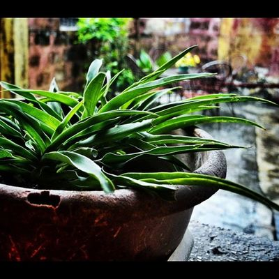 IGDaily Igmanila Ig_philippines Plant Pot Bokehgram Bokeh Colored Nikon