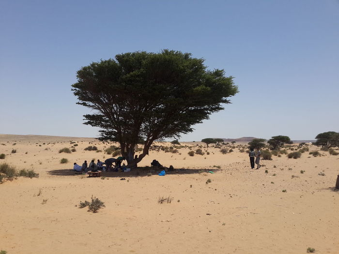 People Under Tree Shadow Against Clear Sky At Desert