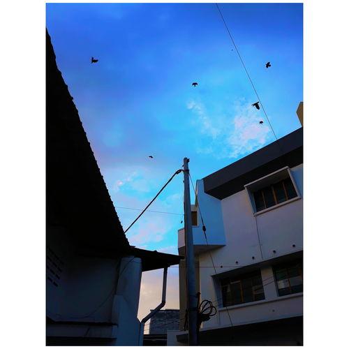 blue-ish Bird