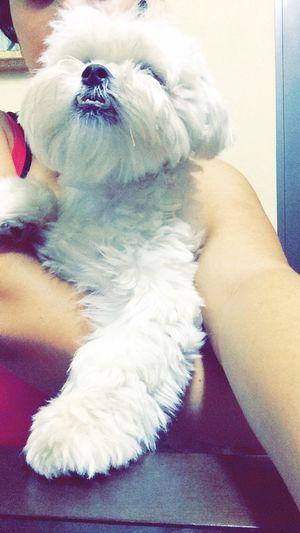 Gordito 🐶💕 Pet