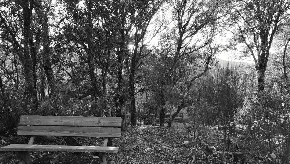 Bench Benchporn Empty Tranquility Tranquil Scene Forest Nature WoodLand Scenics Outdoors Beauty In Nature Trough The Trees Trees And Nature Relaxing Trees Chill Contrast Reflection Loneliness Non-urban Scene Blackandwhite Photography Blancoynegro Great Place Monochromatic Banco