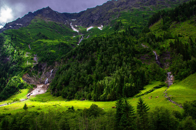 View Of Forest In Mountains