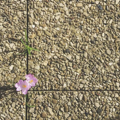 Flower Nature Fragility Background Growth Beauty In Nature No People Plant Day Outdoors Flower Head Close-up Island Beton Sunny Day Mondrian Defy Concrete Cement Square Lines Pattern Contrast Flowers In The City Blogging
