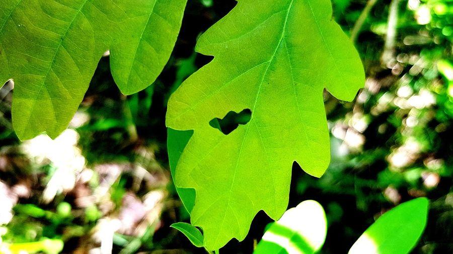 feuilles,