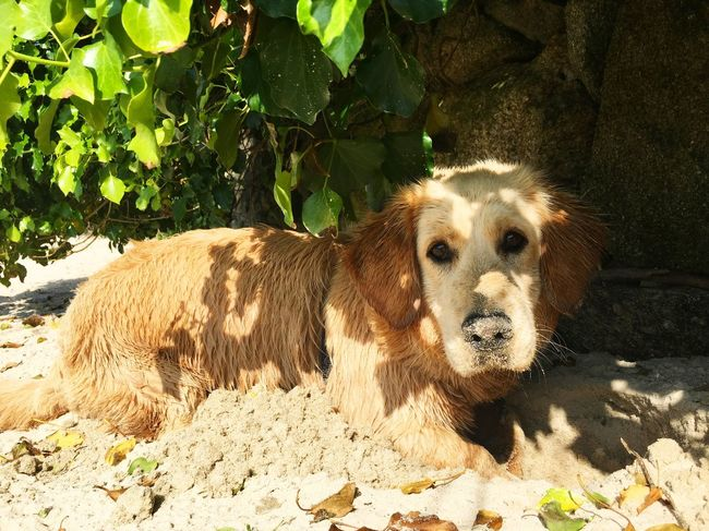 My little puppy!! ❤️❤️❤️ Puppy Puppy Love Puppies Dog Dogs Dog Love Dogs Of EyeEm Beach Dog Beach Sand Cute Pets Cute Cute Dog  Adoptadog AdoptDontShop Adoptanocompres
