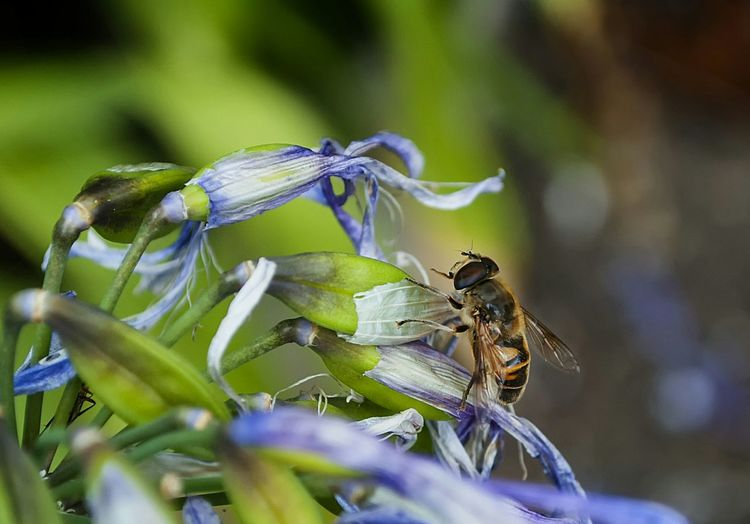 Close-Up Of Insect On Flower Against Blurred Background