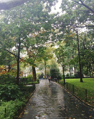 Trees, Bushes, Pavement, Woman, Leaves, Rain, Benches, Grass, Buildings