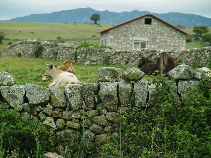 View of a sheep on a wall of a building