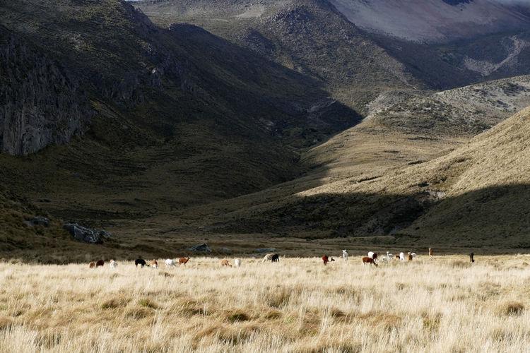 Mammals on field against mountain