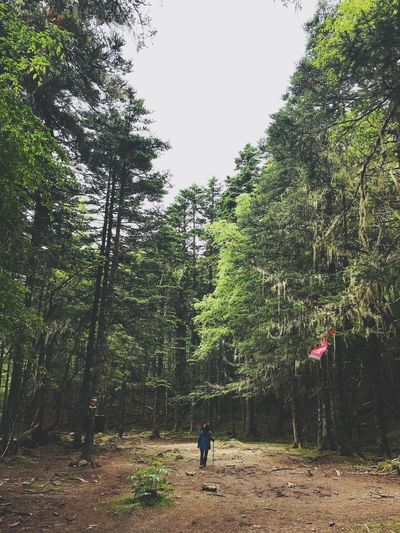 Through the Forest Forest Trekking Hiking Tree Plant Real People Leisure Activity Lifestyles Day Growth Nature One Person Land Beauty In Nature Outdoors Standing Women The Great Outdoors - 2018 EyeEm Awards The Traveler - 2018 EyeEm Awards