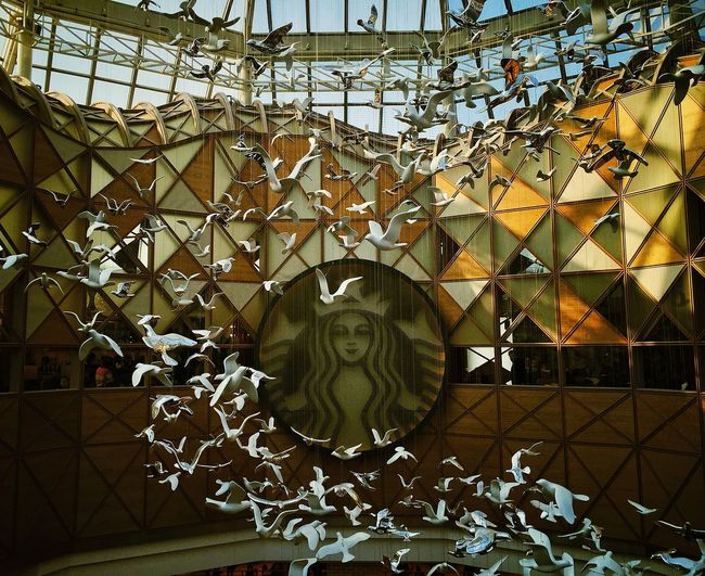 Seoul Starbucks Birds Building IPhoneography Iphone6plus