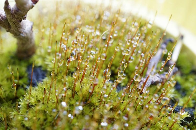 Close-up of water drops on flowering plant