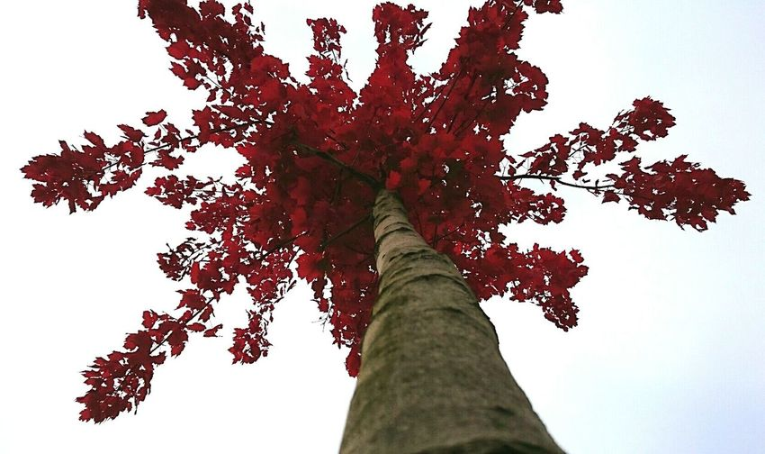 Autumn First Eyeem Photo Tree Autumn Colors