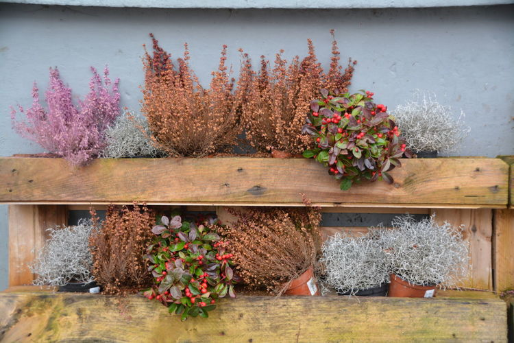 Close-up of potted plants on wooden structure