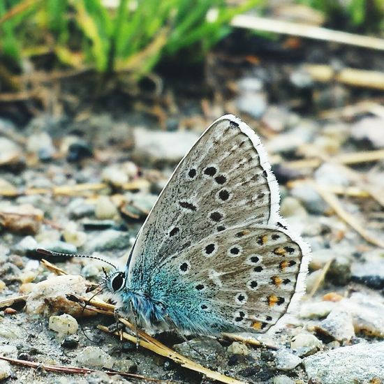 Butterfly Farfalla Intothewild EyeEm Nature Lover Taking Photos Today Verybello Colorful Nature_collection