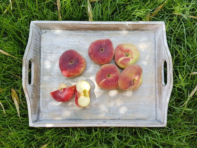 The Week on EyeEm Picoftheday Photooftheday Pictureoftheday Peaches Peaches🍑 Peaches Peach Healthy Eating Healthy Food Fruits Fresh On Eyeem  Fresco Fruits ♡ Fruit Directly Above Summer High Angle View Field Grass Close-up Food And Drink Peach