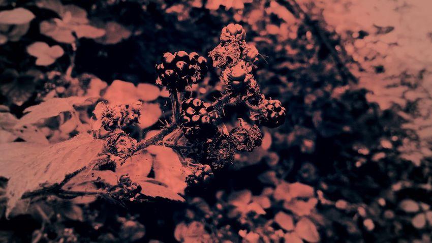Summer fruits Pink Filter Pink Wash Berries Summer EyeEm Selects Close-up Blooming