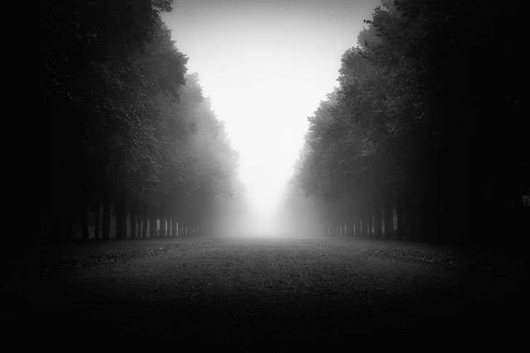 Diminishing perspective of dirt road amidst trees against sky in forest during foggy weather