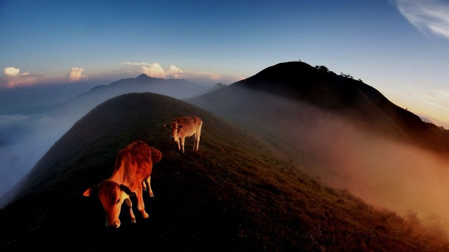 Beauty In Nature Cloud Cloud - Sky Hill Idyllic Landscape Livestock Mammal Mountain Mountain Range Nature No People Non-urban Scene Outdoors Remote Scenics Sky Sun Sunbeam Sunlight Sunset Tranquil Scene 43 Golden Moments Mt Ulap Philippines