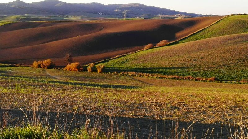 Agriculture Field Rural Scene Crop  Farm Valley Wine Landscape Hill Nature Growth Vineyard Outdoors Plant No People Autumn Winery Beauty In Nature Vine - Plant Winemaking Typical Tuscan View Tuscany View EyeEm Best Shots EyeEm Nature Lover Crafted Beauty