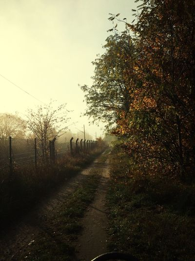 Wildlife & Nature Filter Naturelovers Morninglight