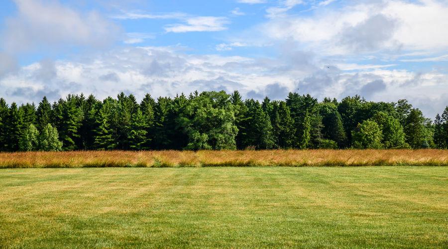 Pine trees on field against sky