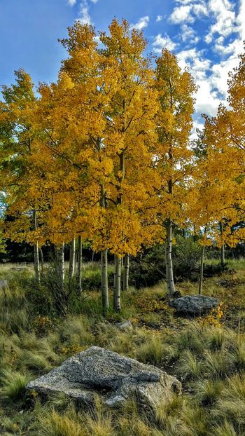 Taking Photos Check This Out Nature Colorado Landscape Autumn Colors Wilkersonpass Can't Get Enough Eye Em Nature Lover EyeEm Best Shots