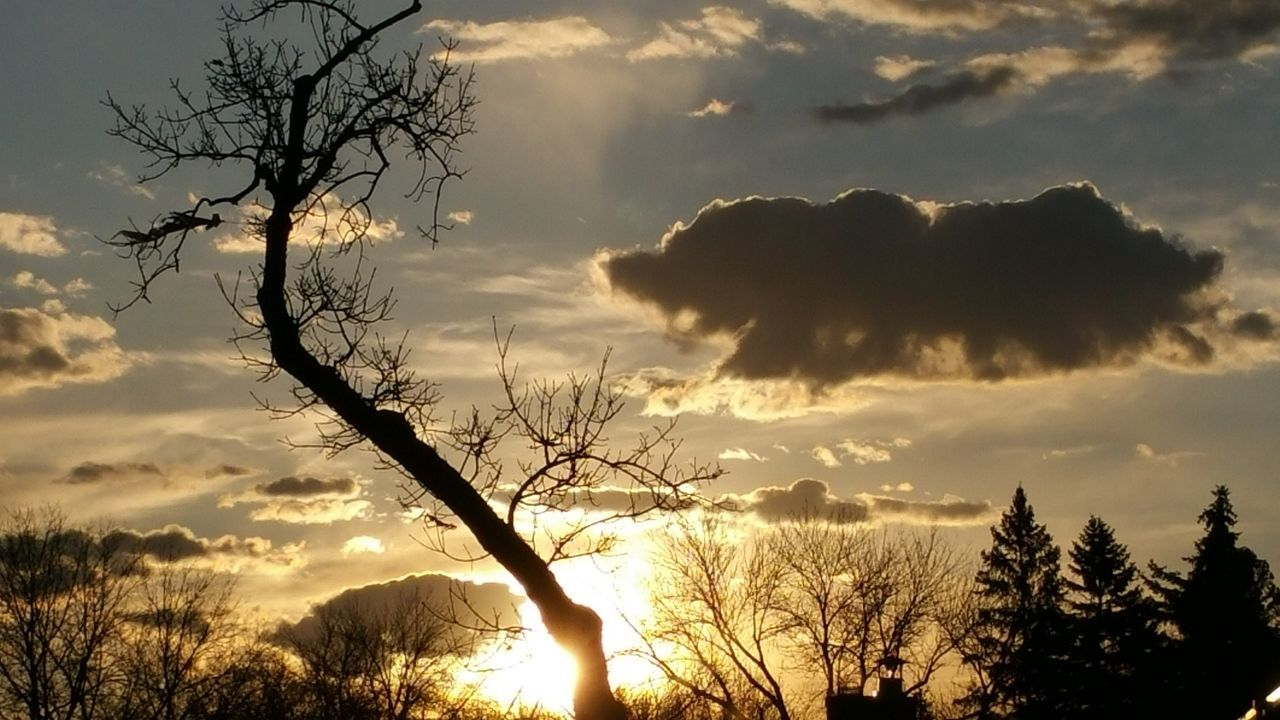 Silhouette Of Bare Tree Against Sunset Sky