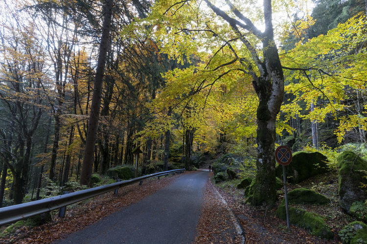 Road amidst trees in forest during autumn