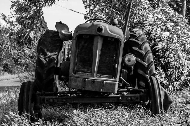 I will haunt your nightmares. Zombie Old Tractor Zombies!  Happy Halloween 50mm F1.8 50mm Frightening Rust Rusty First Eyeem Photo Rusty Autos Rusty Tractor