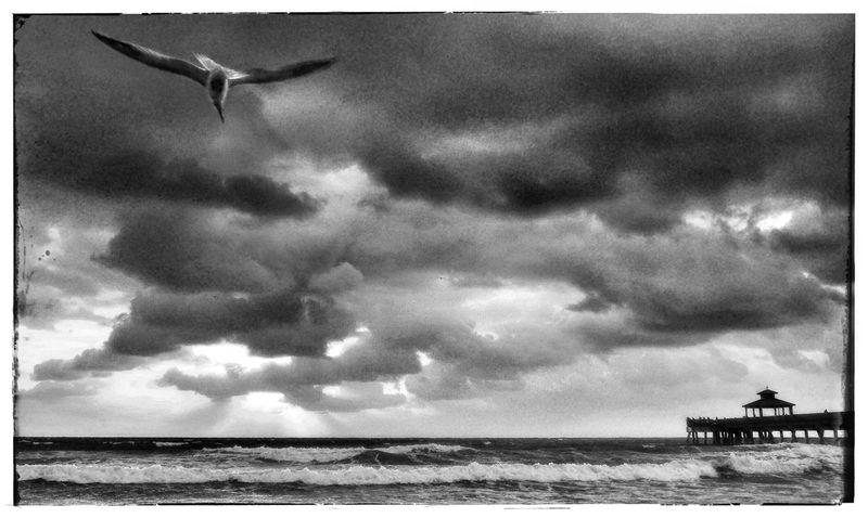 Bird in flight over Deerfield Beach, Florida. Blackandwhite Bird Clouds And Sky Pier Beach
