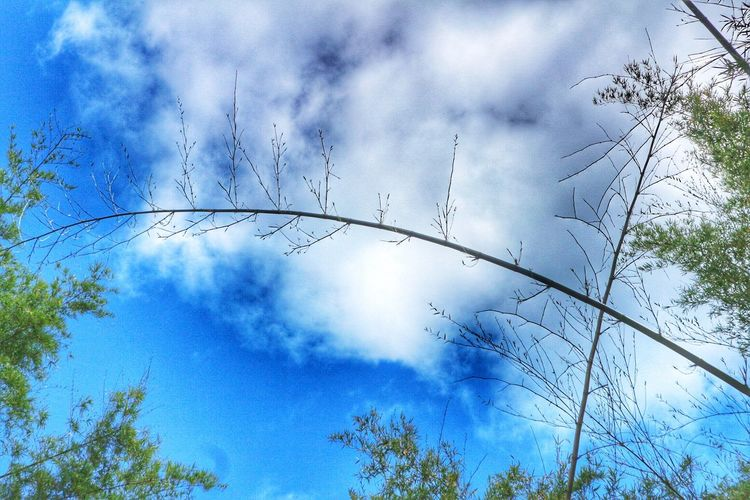 Sky Cloud - Sky Low Angle View Day No People Nature Tree Beauty In Nature Outdoors Flying Bird