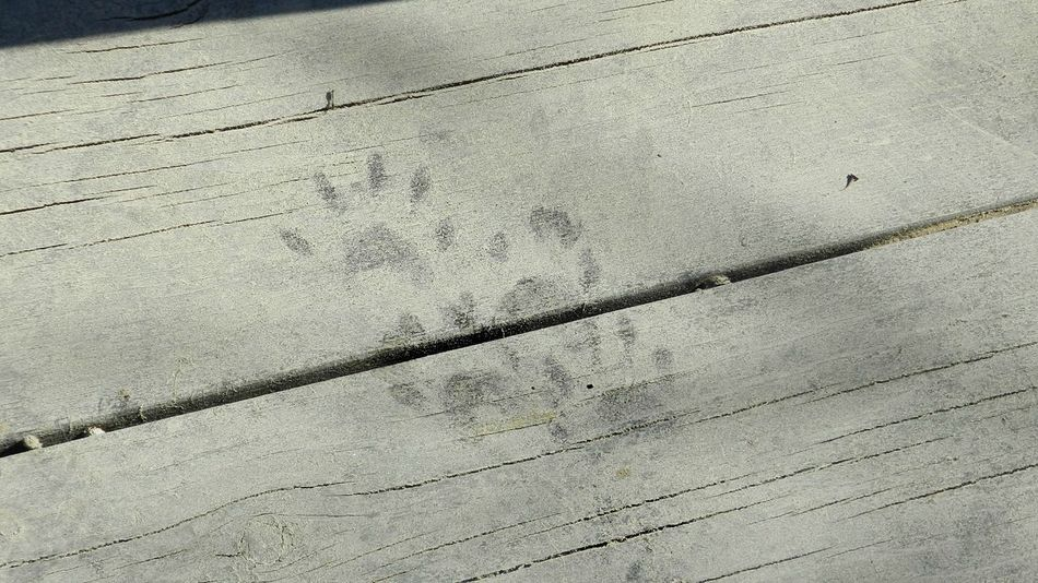 A Visitor Before Me Animal Tracks Animalprint Animaltracks Backgrounds Board Walk Boardwalk Close-up Creature Day Dirty Feet Dock Foot Prints FootPrint Full Frame Nature No People Outdoors Paw Paw Prints Pawprint Pawprints Visitor Wood Wood - Material Wooden Path