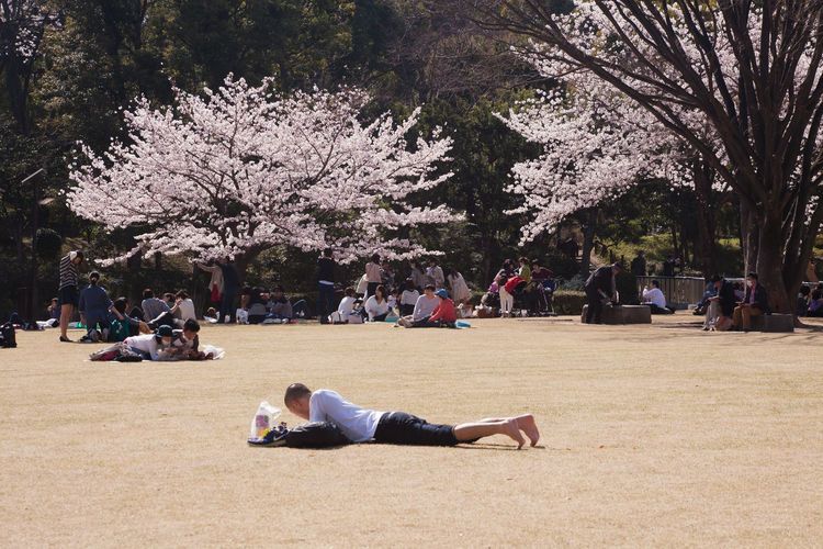 Carefree Cherry Blossoms Day Kitanomaru Leisure Activity Lifestyles Men Nature Outdoors Real People Relaxing Sakura Springtime Sunny Tokyo Tree Women 北の丸公園
