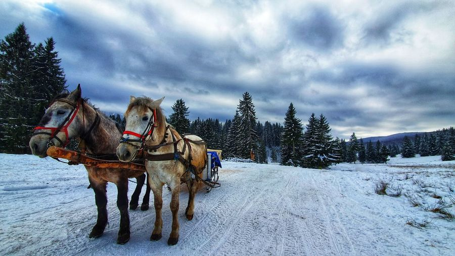 Horse cart on snow covered landscape