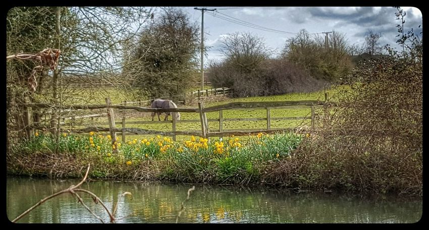Broad Oak Water Nature Scenics Outdoors Tranquility Landscape Beauty In Nature River Daffodils Natural World
