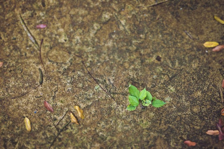 Hope. Mood Nature Photography Nature_collection Barren Leaf High Angle View Sunlight Close-up Plant Growing Young Plant Soil Leaves