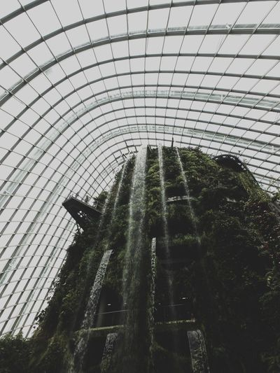 Greens. Indoors  Greenhouse Singapore Nature Architecture Garden Connected By Travel Lost In The Landscape EyeEmNewHere