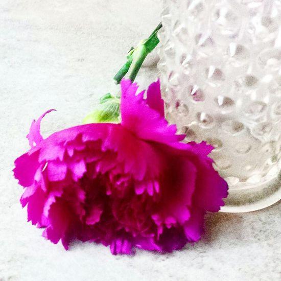 Pink Color Flower Flower Head Close-up Springtime Single Flower Growth Studio Shot Botany Peony  Peony Macro EyeEmbestpics White Glass Feminine Stockphoto Lieblingsteil
