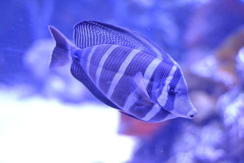 Animal Blue Animal Themes One Animal Animal Body Part Aquarium Sea Life Mammal No People Swimming Close-up Indoors