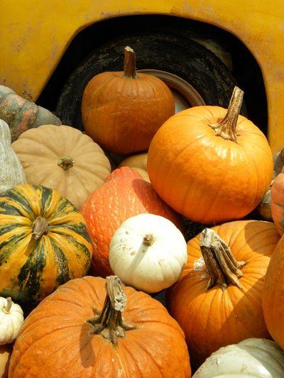 Pumpkin Food