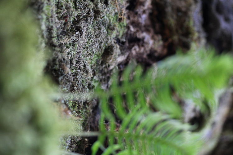 Beauty In Nature Close-up Day Green Color Growth Moss Nature No People Outdoors Plant Selective Focus Tranquility Tree Tree Trunk