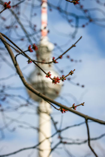 Low Angle View Of Branch Against Fernsehturm
