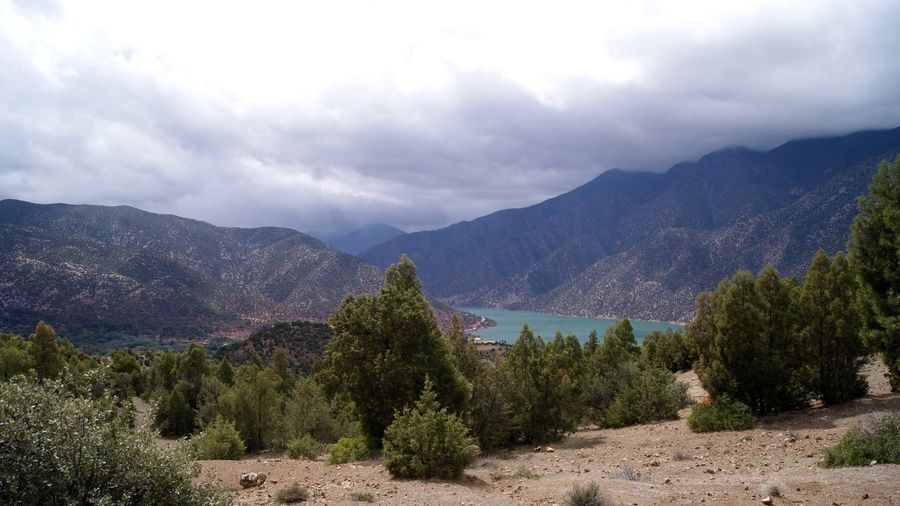 Trees on landscape against mountain range
